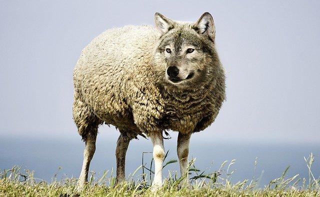 Fałszywy prorok, wilk w owczej skórze